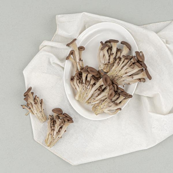 느타리버섯(300g/무농약)